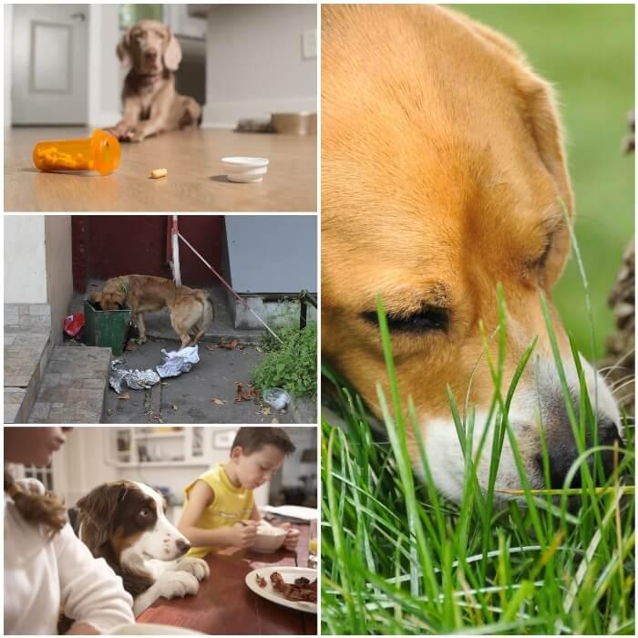 Causas y tipos de vómito en los perros