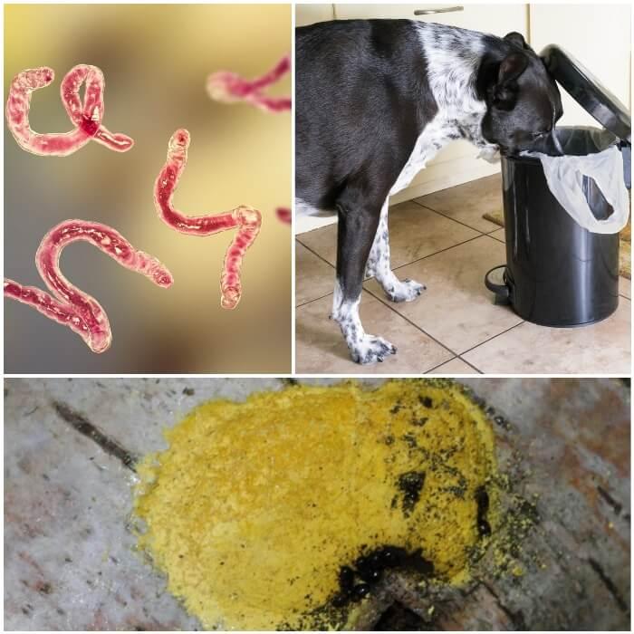 Vómito amarillo en los perros
