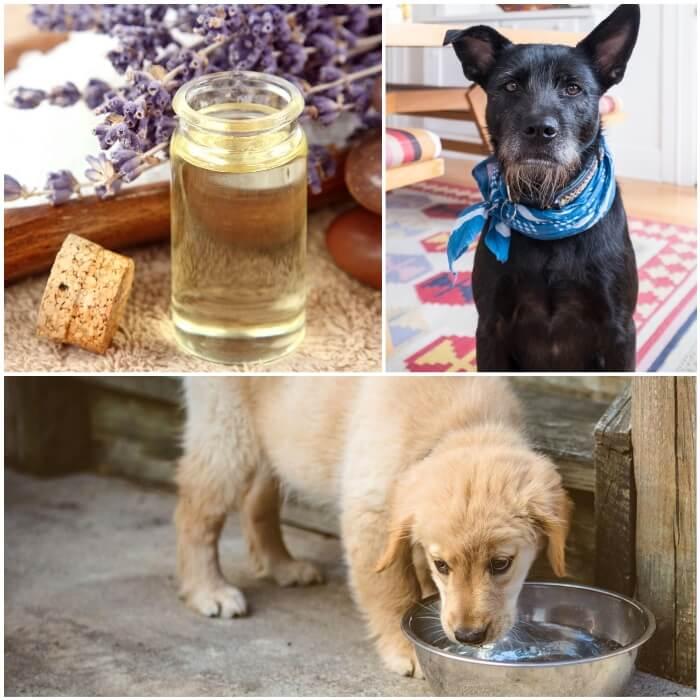 Collar casero para pulgas en perros