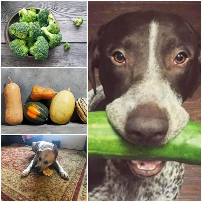 Vegetales buenos para perros