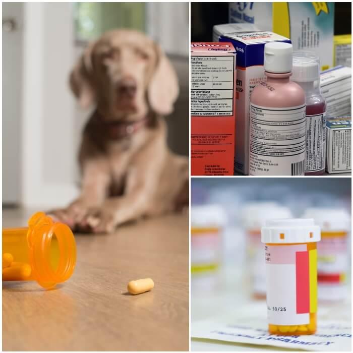 Veneno para perros medicamentos