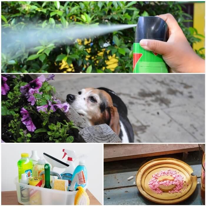 Veneno para perros químicos