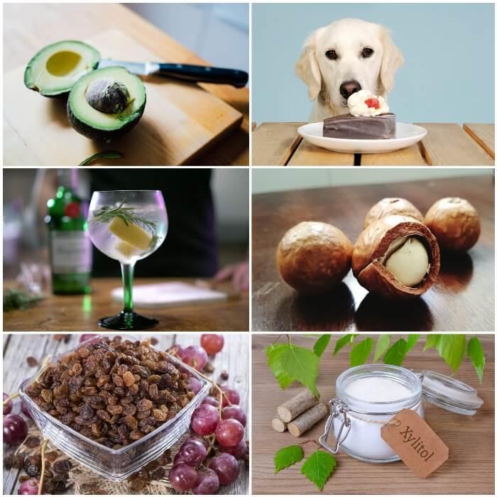 Veneno para perros alimentos