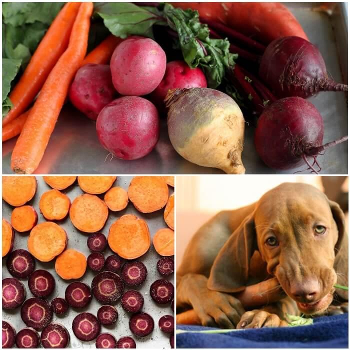 Verduras de raíz (tubérculos) para perros