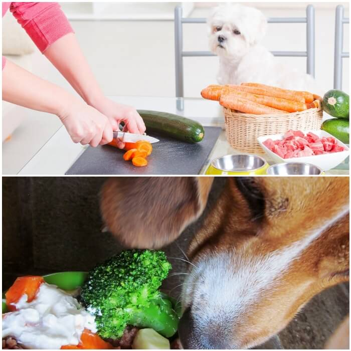 perro comiendo verduras