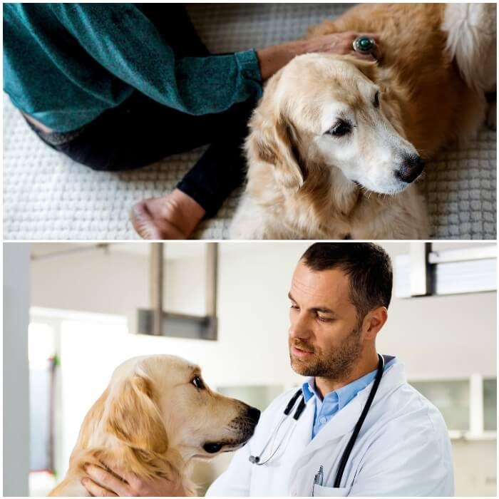 Verrugas en perros adultos y cachorros