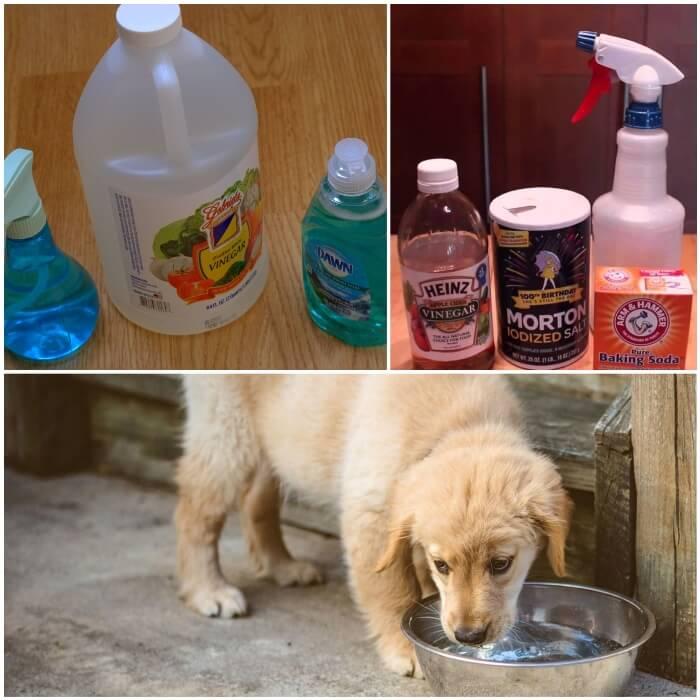 Vinagre para eliminar pulgas en perros