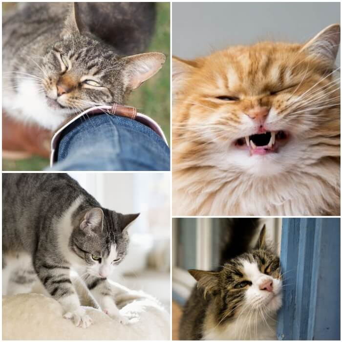 gatos mostrando diferentes comportamientos