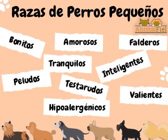 imagen diseño razas de perros pequeños