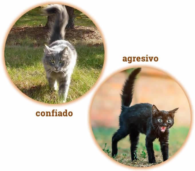 gato seguro y gato agresivo