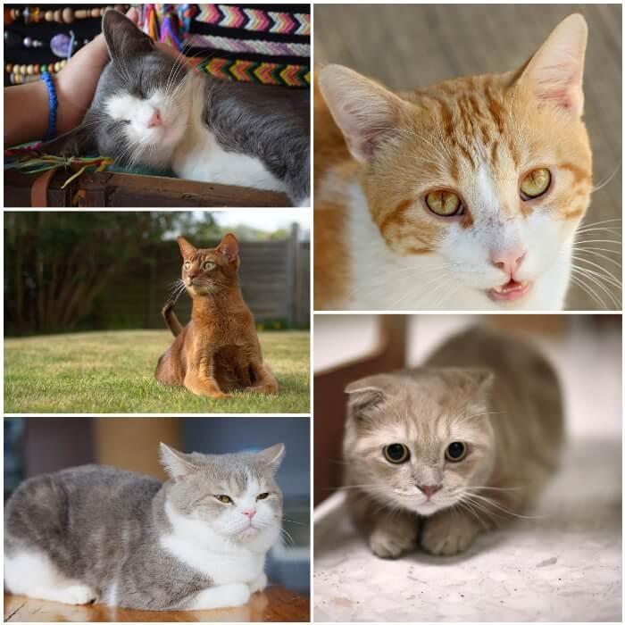 gatos mostrando cambios en los ojos