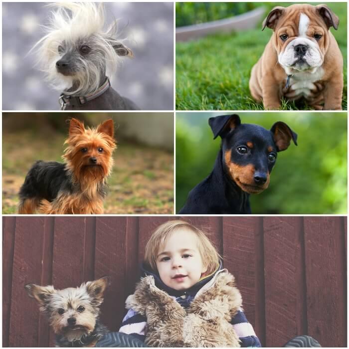 collage de perros chiquitos con niño