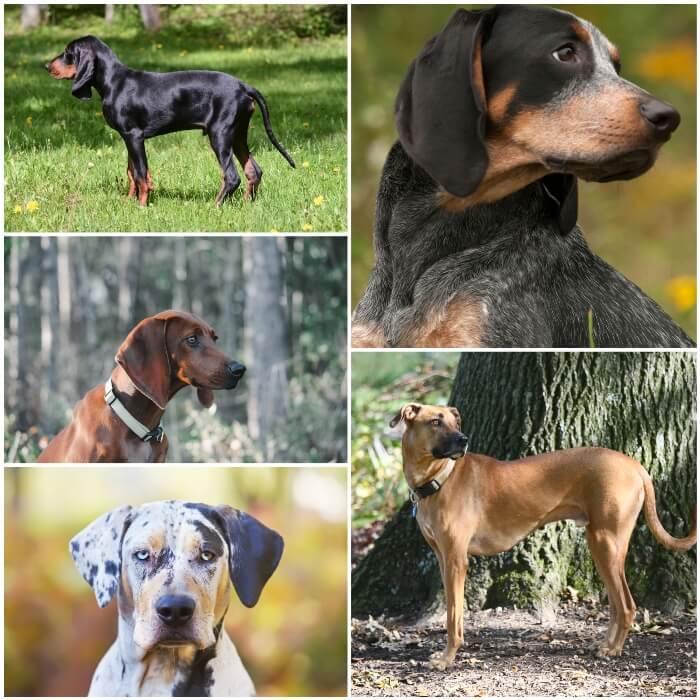 collage con perros sabuesos de árbol