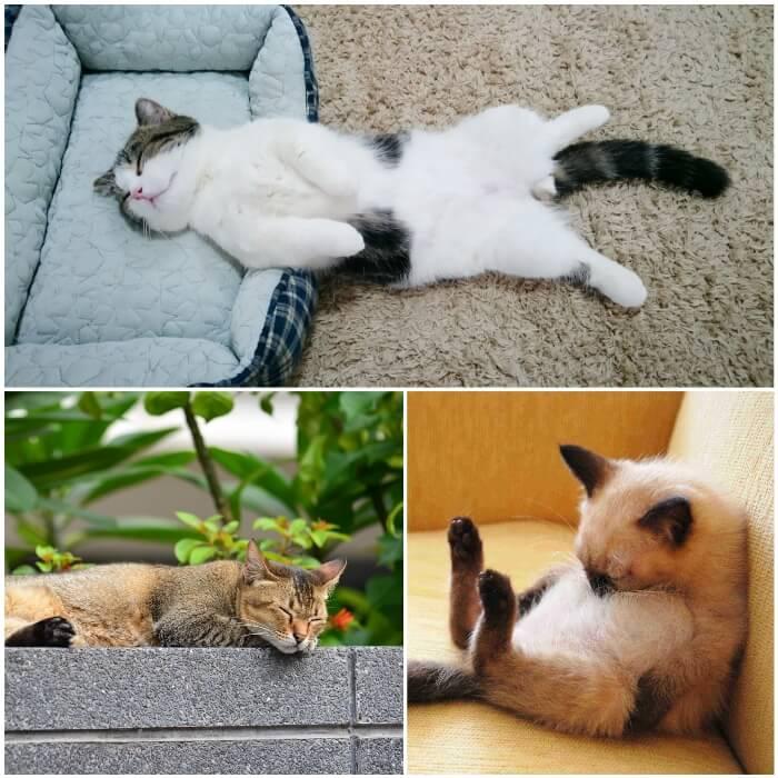 Gatos durmiendo en casa
