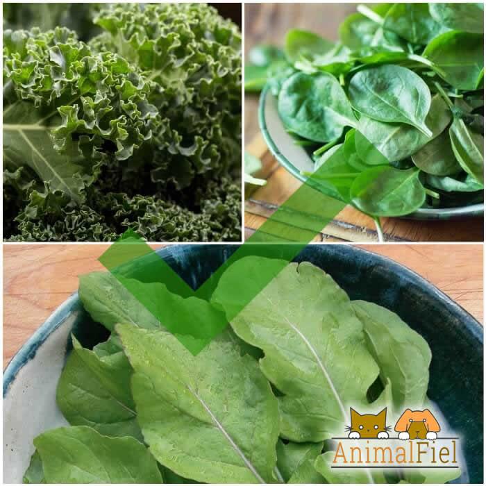 diferentes verduras de hoja verde