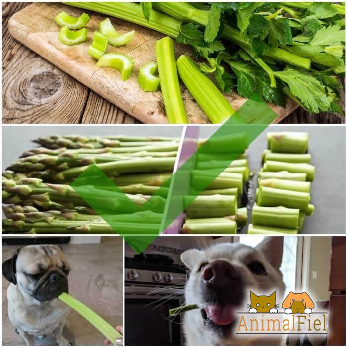 perros comiendo apio y espárrago