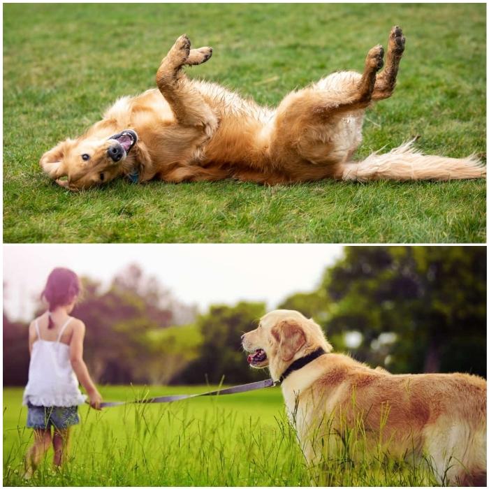 perro jugando sobre la hierba