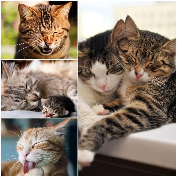 gatos con los ojos cerrados