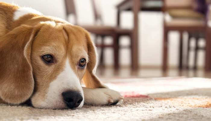 perro cabizbajo en el suelo