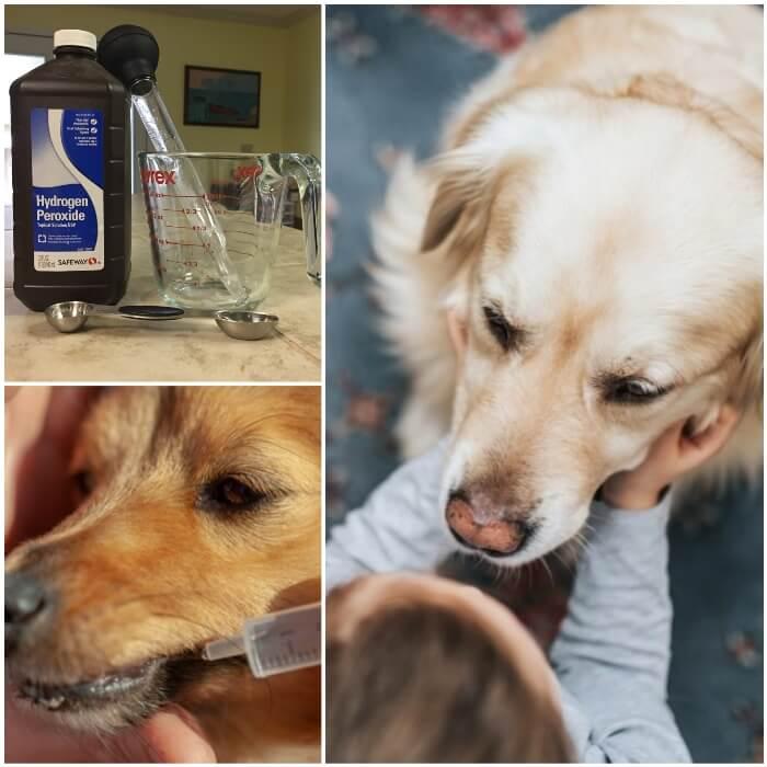 dueño administrando una solución de agua oxigenada a su perro
