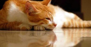 gato decaido