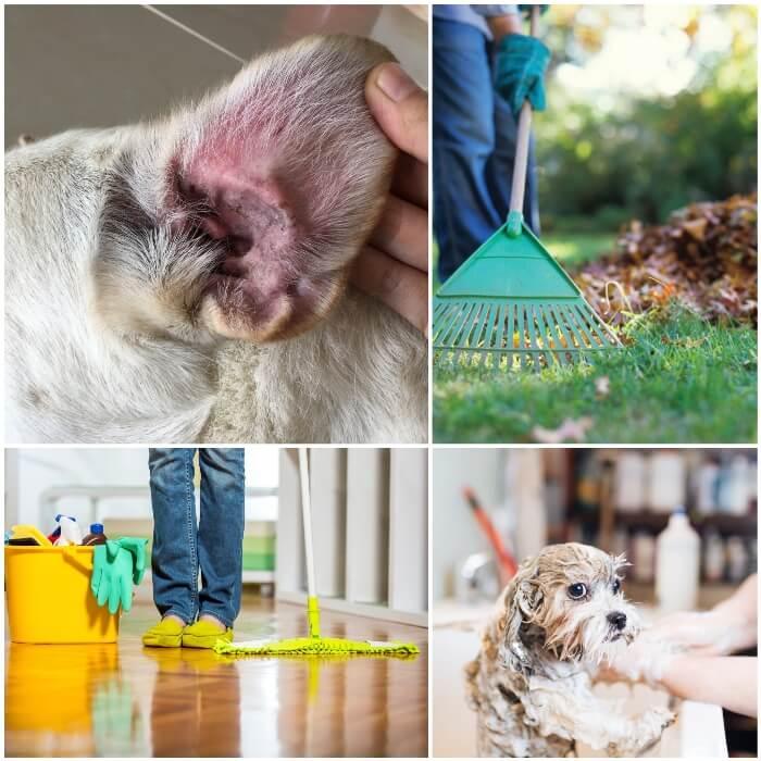 persona higienizando el hogar y su perro