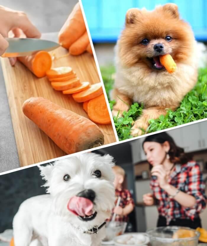 perro pomerania con zanahoria en la boca