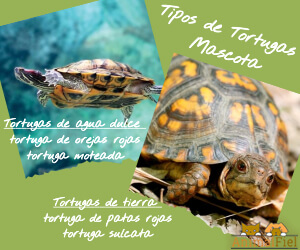 imagen diseño tipos de tortugas mascota