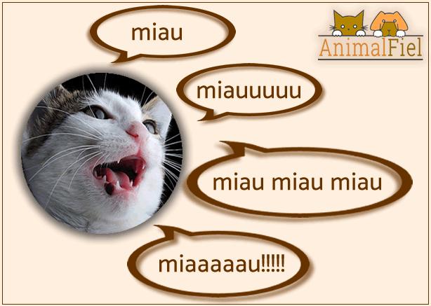 imagen de un gato y sus diferentes maullidos