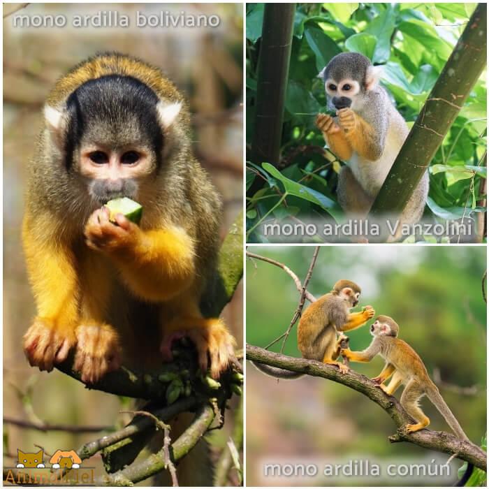 mono ardilla comiendo fruta en las ramas