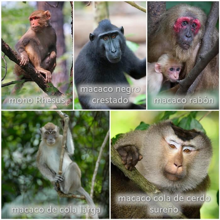 macaco en el árbol con mono bebé