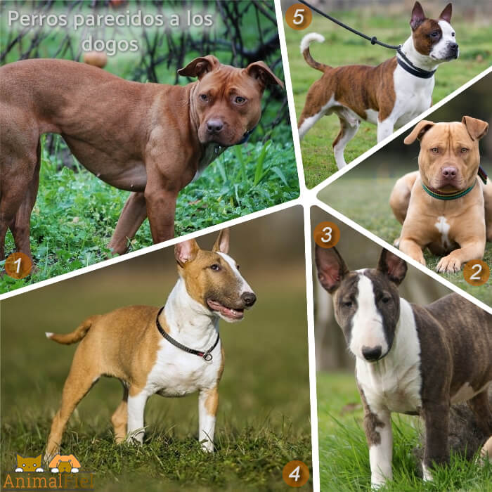 collage de perros de aspecto parecido