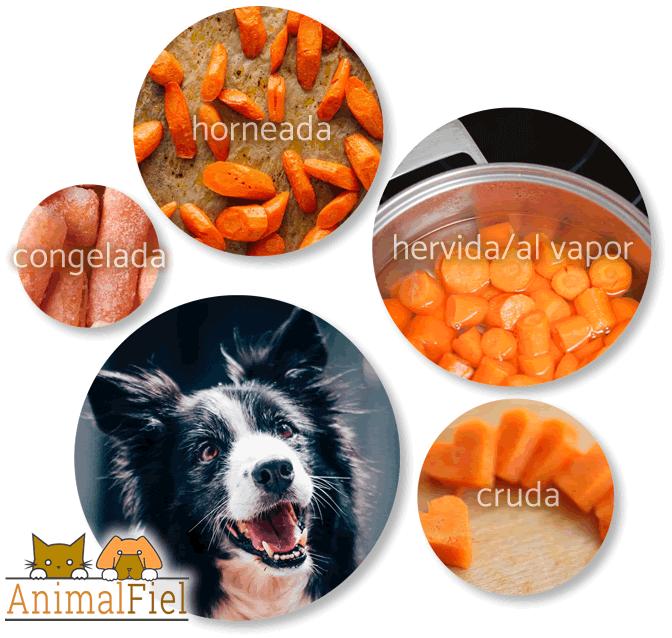 collage de diferentes opciones de zanahoria