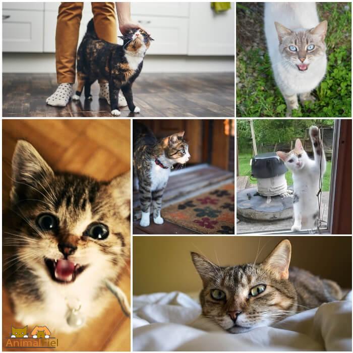 gato alegre y cariñoso