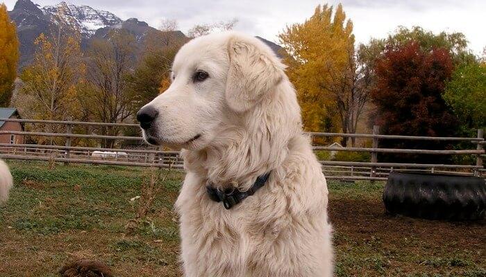 perro al aire libre en una finca