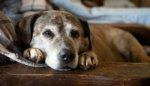 perro enfermo acostado en el suelo