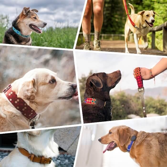 varios perros usando diferentes tipos de collares