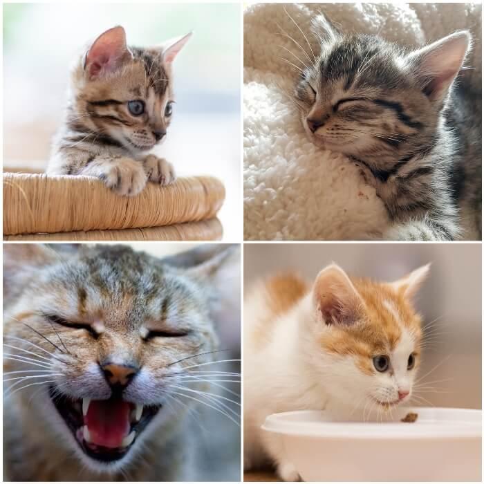 gato joven que duerme acurrucado
