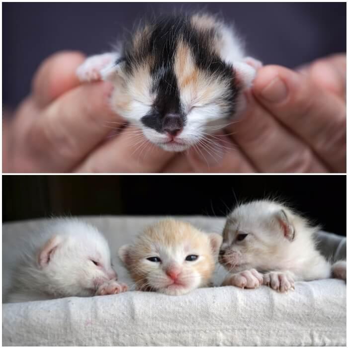 manos sosteniendo un gatico recién nacido