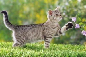 gato joven jugando sobre la hierba