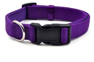 collar de nylon color púrpura
