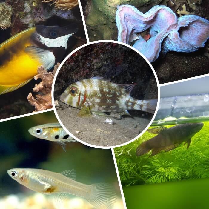 pez dormido cerca del fondo del acuario