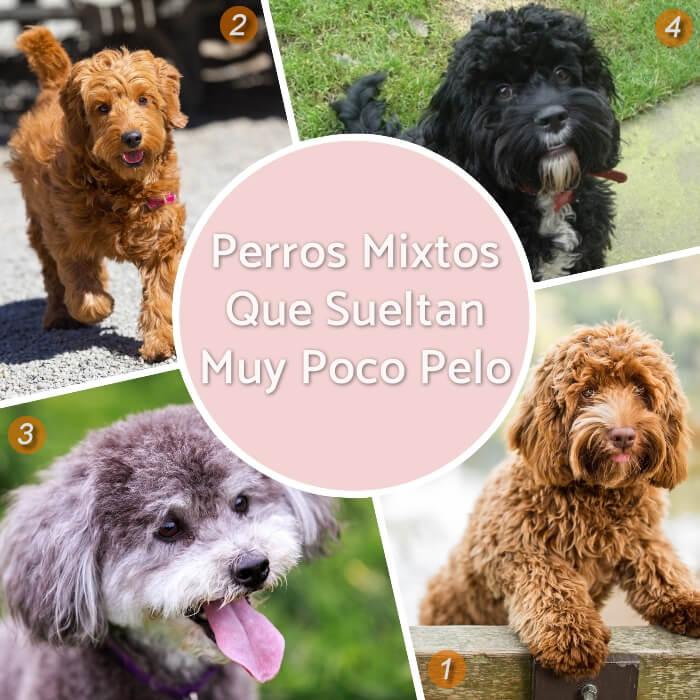 imagen collage de perros mixtos poco derramadores