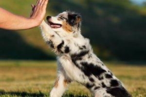 perro mediano dándole una pata a su dueño
