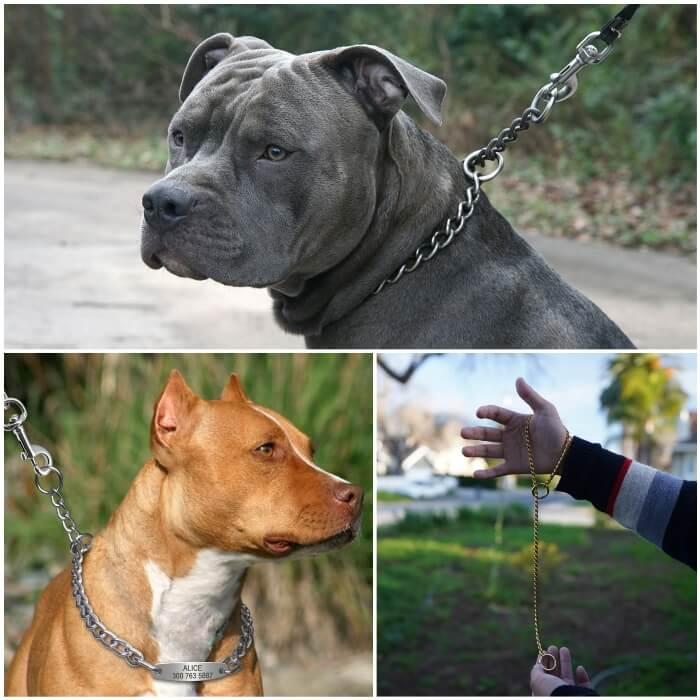 perro fornido paseando con collar de ahorque