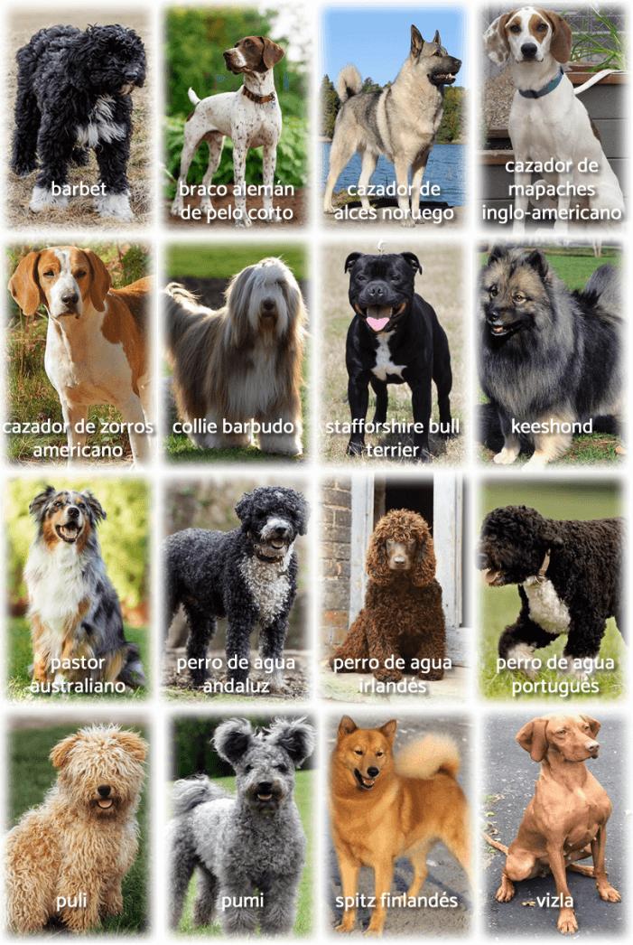 imagen collage con foto y nombre de otros perros medianos