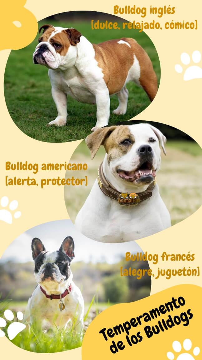 imagen diseño temperamento del bulldog