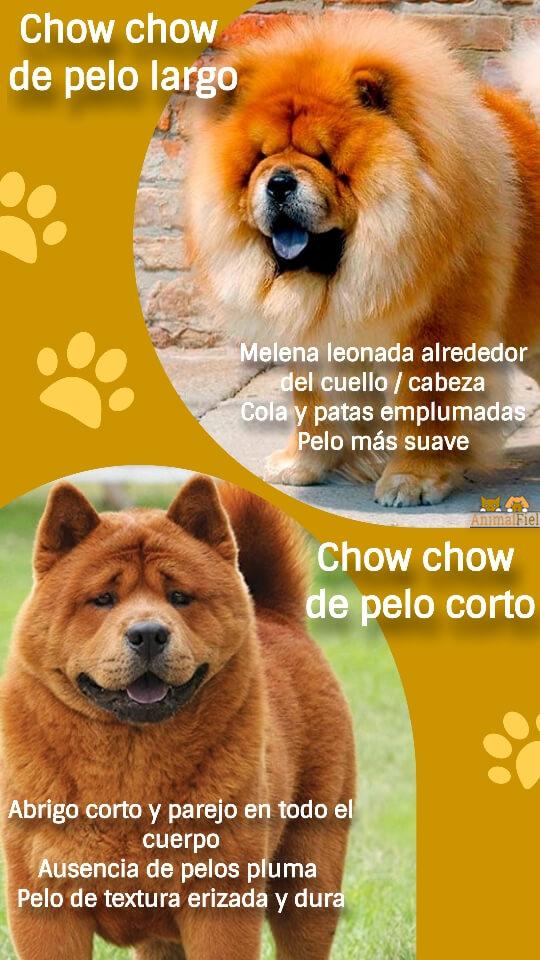imagen diseño diferencias entre chow chows