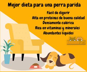 mensaje sobre la mejor dieta para una perra parida