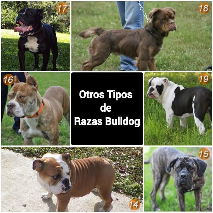 imagen collage de otros tipos de bulldogs